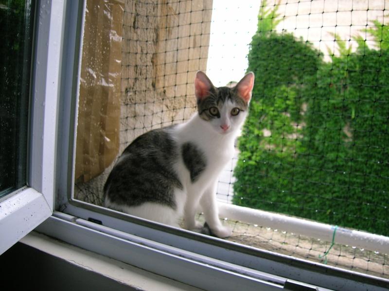 Lino et Nolan, chatons nés le 1er avril, sauvetage suite à expulsion dans le 60 Dscn1011