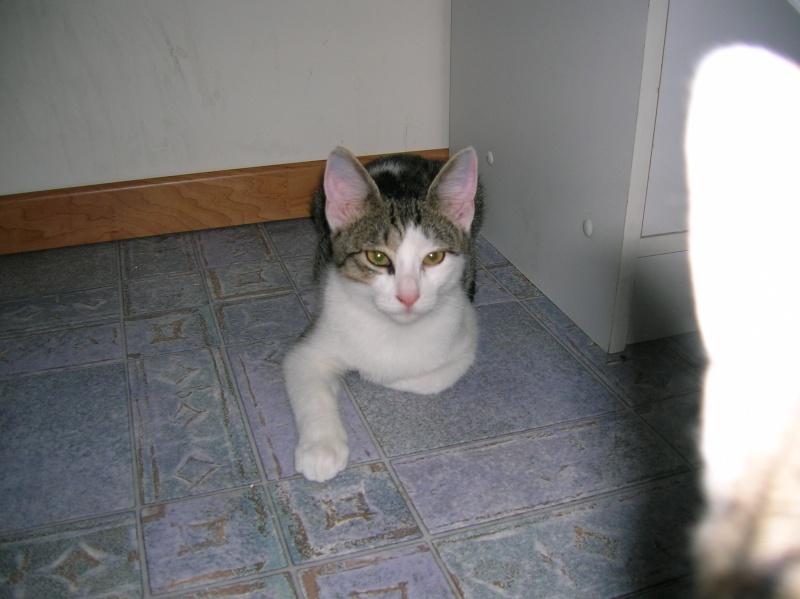 Lino et Nolan, chatons nés le 1er avril, sauvetage suite à expulsion dans le 60 Dscn1012