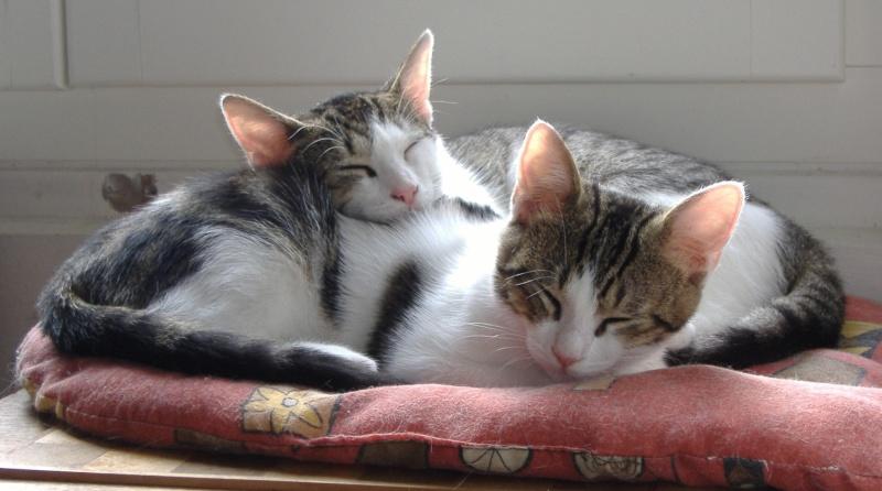 Lino et Nolan, chatons nés le 1er avril, sauvetage suite à expulsion dans le 60 Photo_10