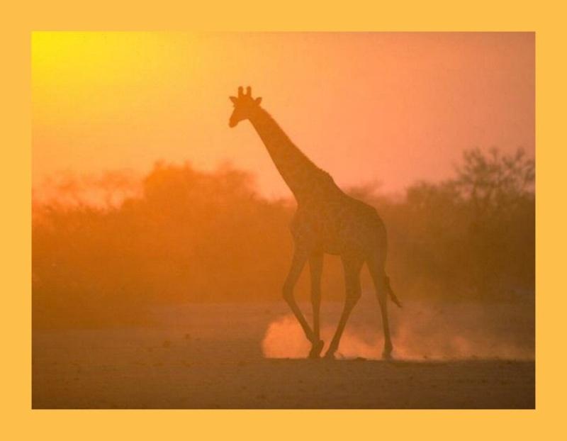 Marshal Rosenberg : « Tout conflit peut se transformer en un dialogue paisible » Girafe11