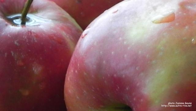Nos enfants nous accuseront Pommes10