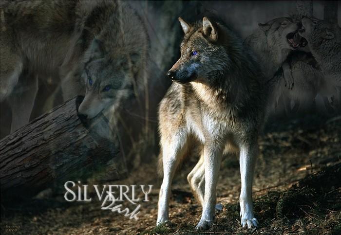 New Blood ... Luxian et Silverly DAKS Silver10