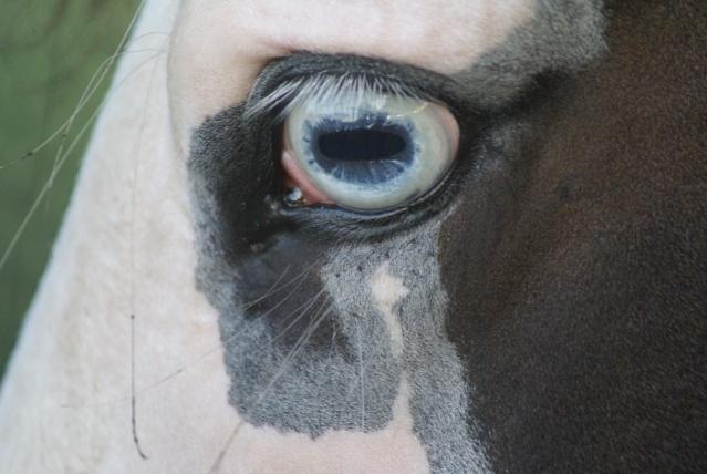 CONCOURS PHOTOS, L'oeil des chevaux ! - Page 2 Dsc03310
