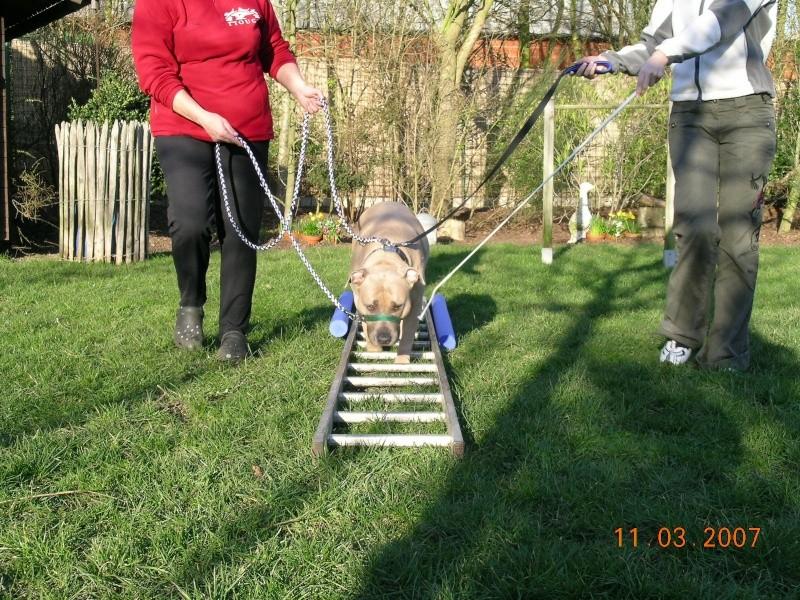 Utilisation du licol/licou/collier ou harnais de tête et conditionnement du chien Dscn5310