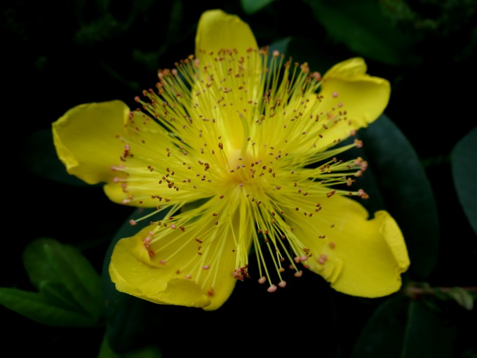Toutes les fleurs de couleur jaune - Page 2 Sta_4510