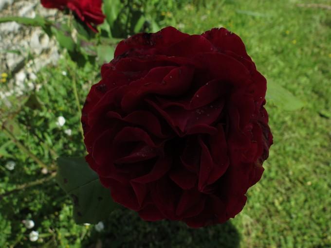 photos fleurs de marie (album 2) - Page 2 Stc_4610