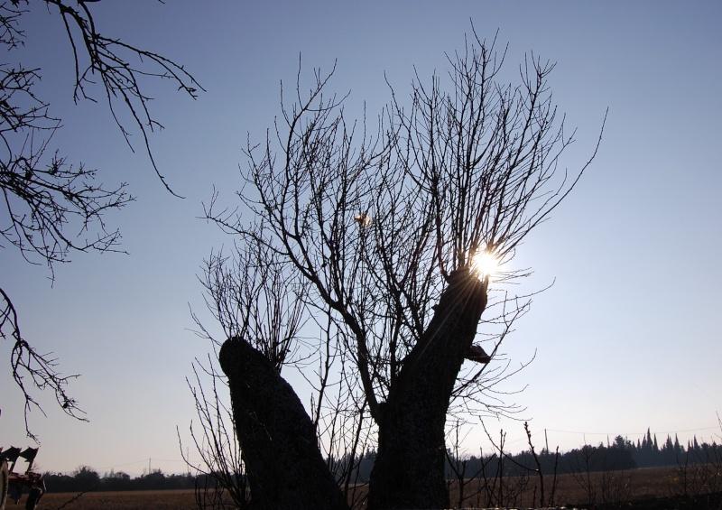 nature hivernale tot le matin! 2010
