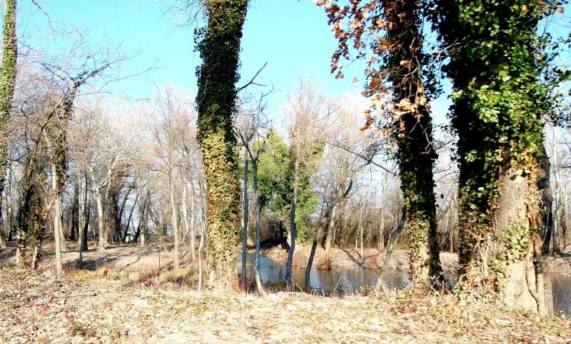 nature hivernale tot le matin! 3810