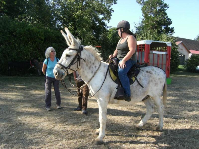 Foire de l'âne et de la mule 10060210