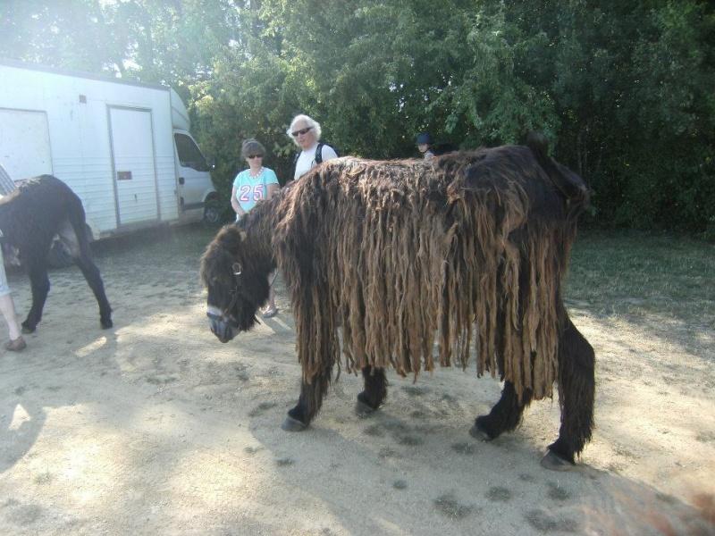 Foire de l'âne et de la mule 10168410