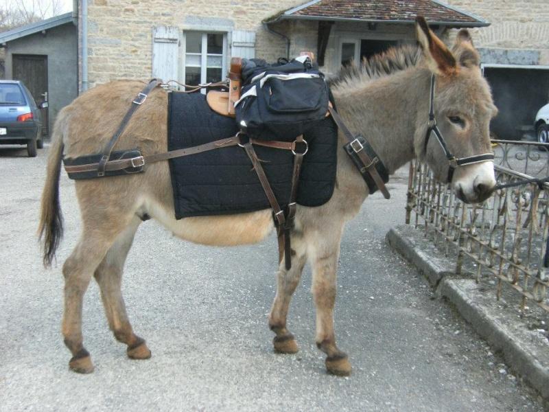 Foire de l'âne et de la mule 42867510