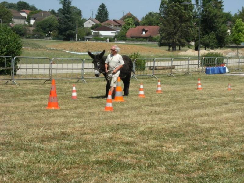 Foire de l'âne et de la mule 44673_10
