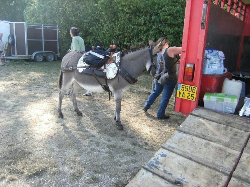 Foire de l'âne et de la mule 54071110
