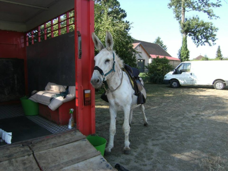 Foire de l'âne et de la mule 54709710
