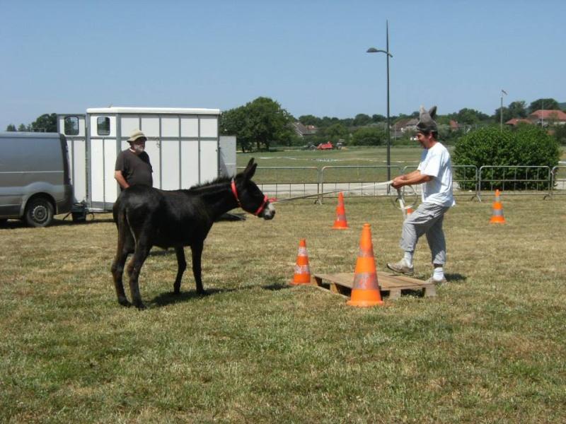Foire de l'âne et de la mule 63015_10
