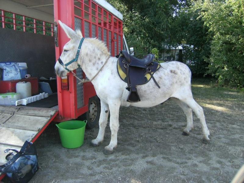 Foire de l'âne et de la mule 93464210