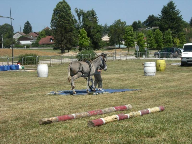 Foire de l'âne et de la mule 94576510