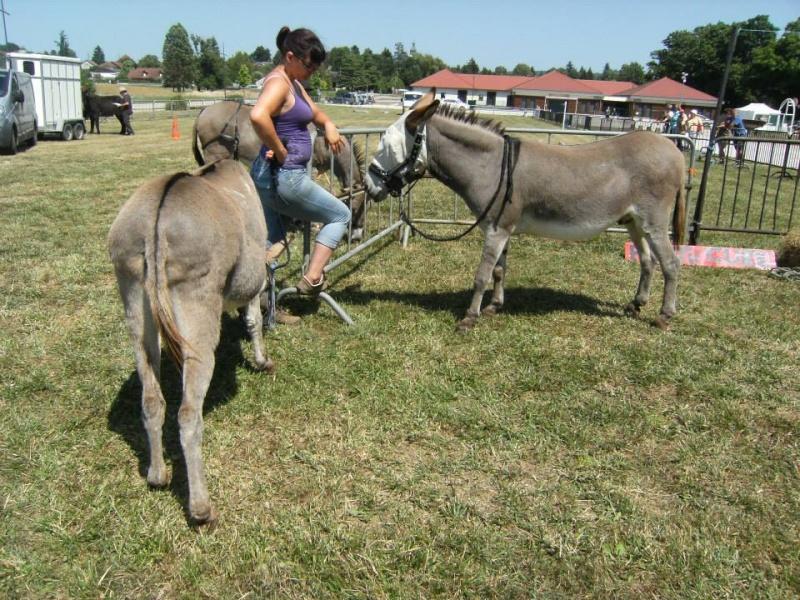 Foire de l'âne et de la mule 96916510