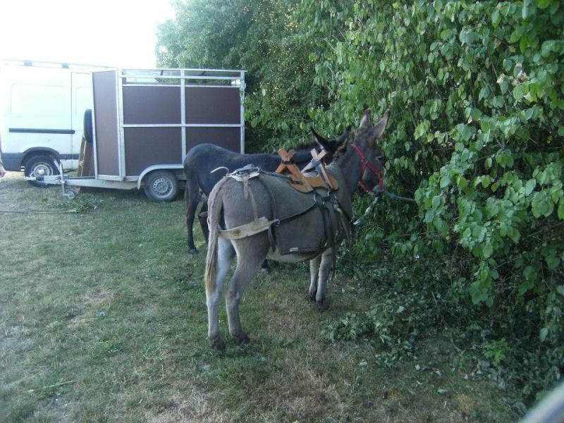 Foire de l'âne et de la mule 97015910