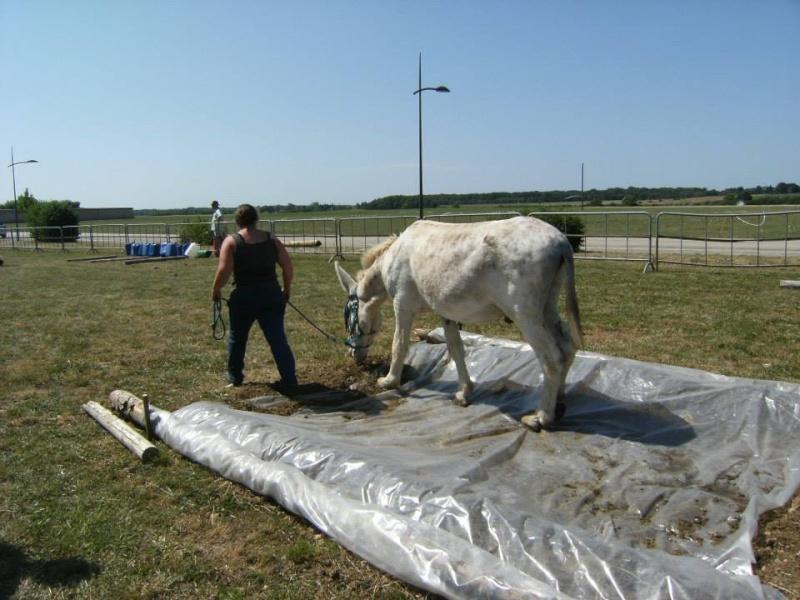 Foire de l'âne et de la mule 97082010