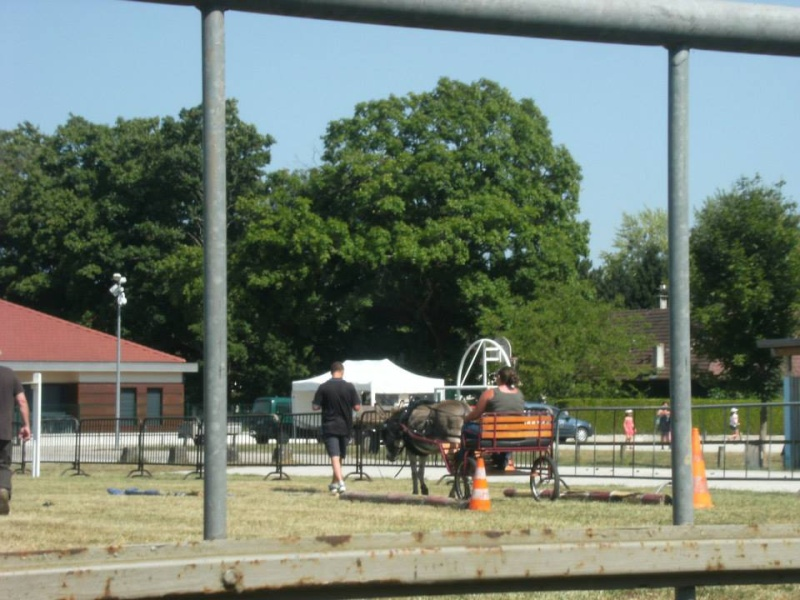 Foire de l'âne et de la mule 97157310