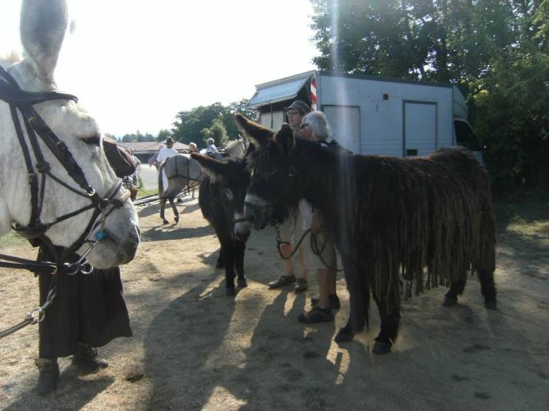 Foire de l'âne et de la mule 97169910