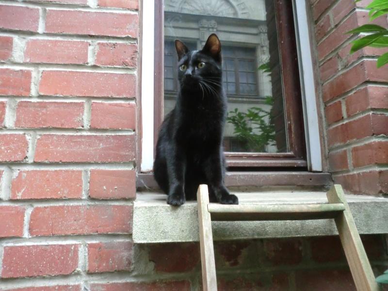 Khéops et Khephren 2 grands chatons noirs7 mois Kheops10
