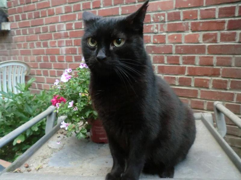 MIKO  jolie chatte noire 4 fractures du bassin a l'adoption - Page 3 Miko210