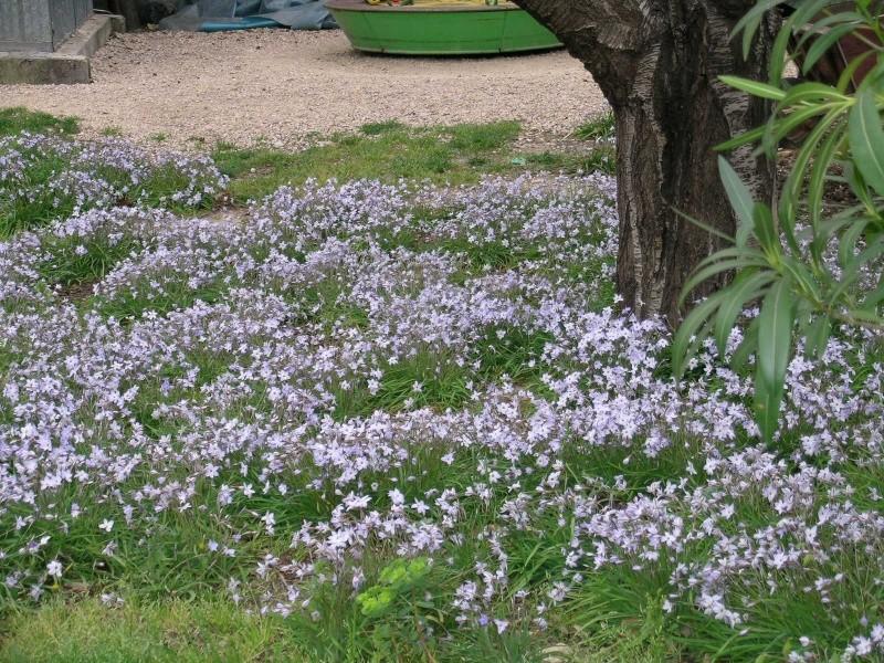 recherche de tapis de fleurs au pied dun arbre Imgwal10