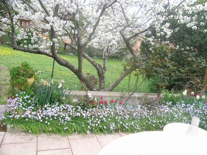 recherche de tapis de fleurs au pied dun arbre Imgwal12