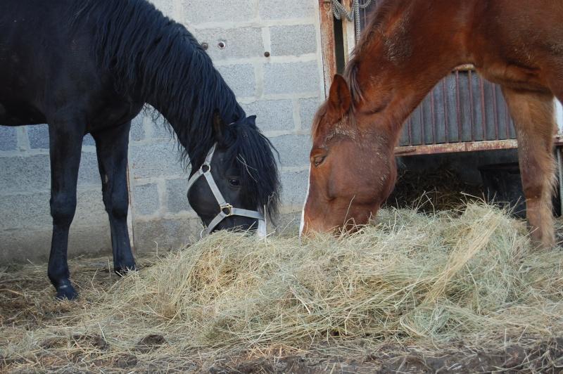 Mon premier cheval Rencon10