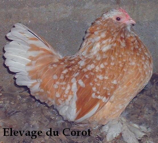 L'élevage du Corot Ukl_oc10