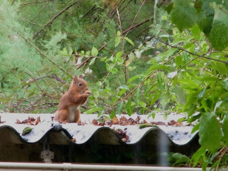 mon petit voleur de noisettes - nouvelles photos page 2 Ecureu13