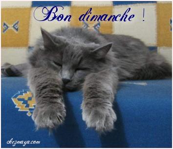DIMANCHE 23 FEVRIER 2020 Saint LAZARE Bon-di10