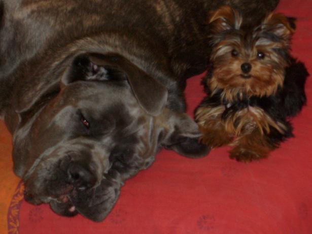 Keenah petite panthère noire 5 mois Charli11