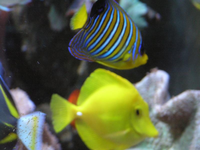 mes poissons P2020911