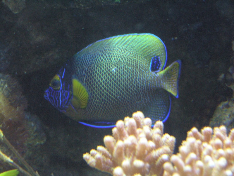 mes poissons P2020912