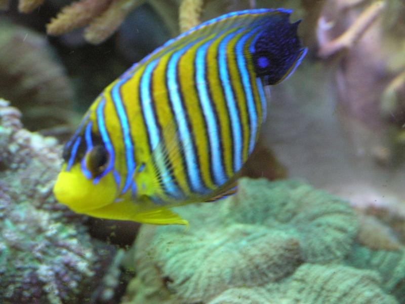 mes poissons P2020914