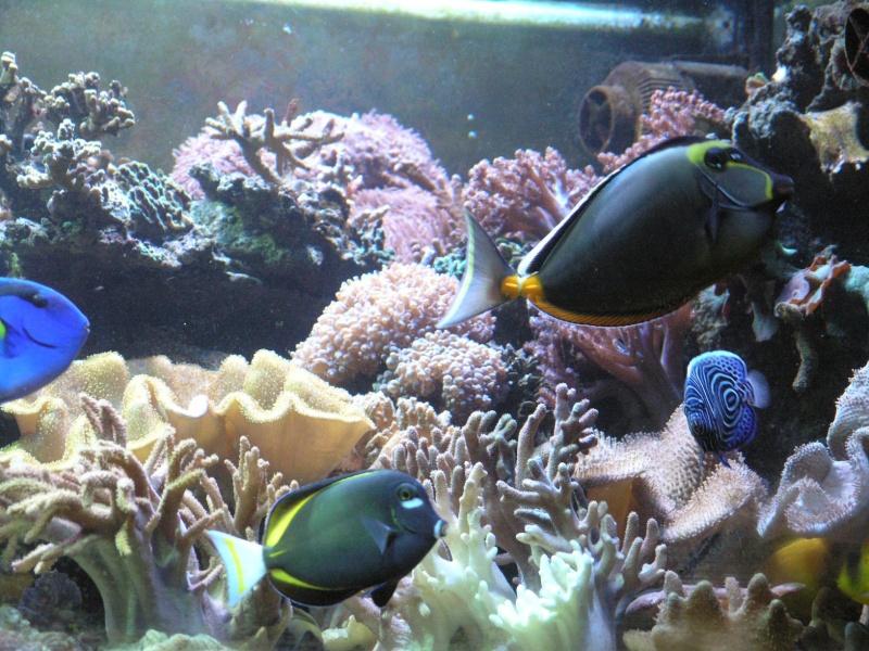mes poissons P2020915
