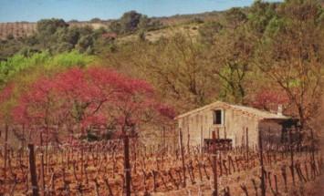Quelques images du Languedoc-Roussillon 214
