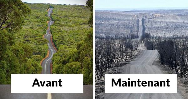 Australie : sécheresse provoquée Foret_10