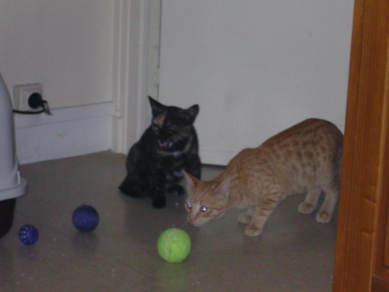Izzy, et Buzz, 5 mois à adopter ensemble Izzy_e13