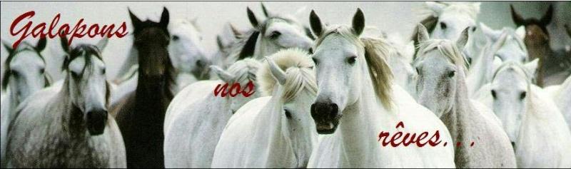 Galopons nos rêves... Forum de chevaux et d'équitation! Bannie10