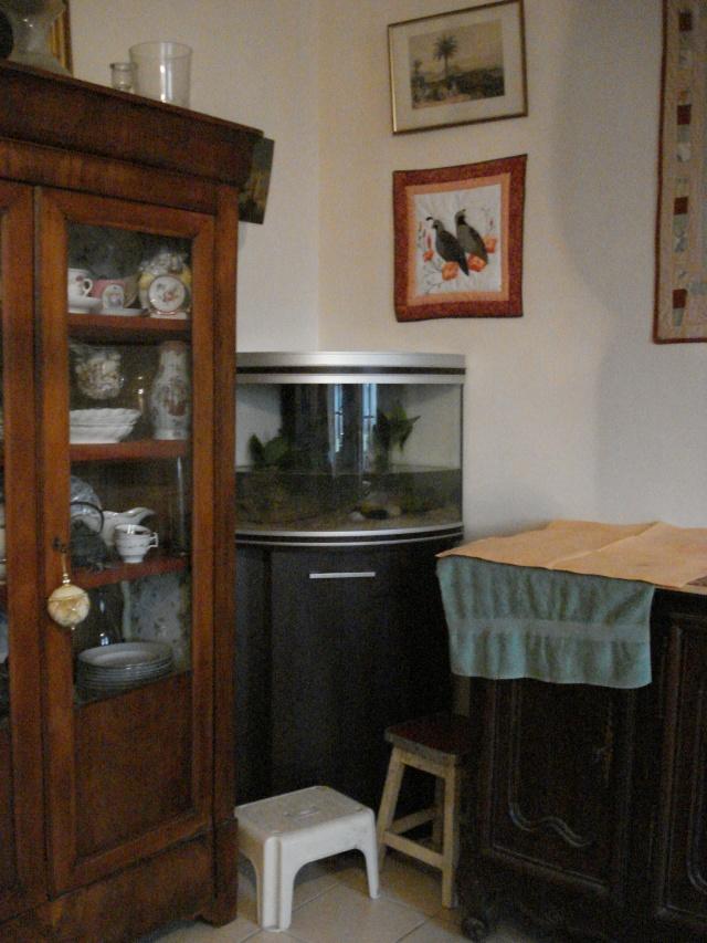 l'aquarium de Giroflée Chat_041