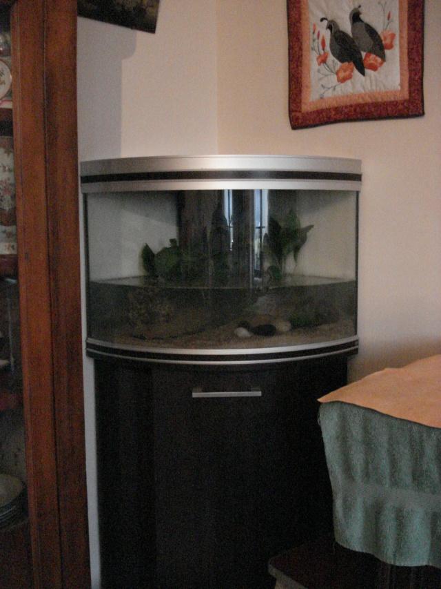 l'aquarium de Giroflée Chat_042