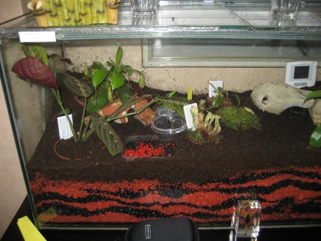 Comment relooker un terra à heterometrus spinifer Terrar11