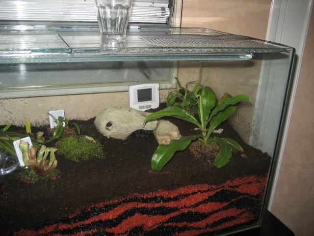 Comment relooker un terra à heterometrus spinifer Terrar12