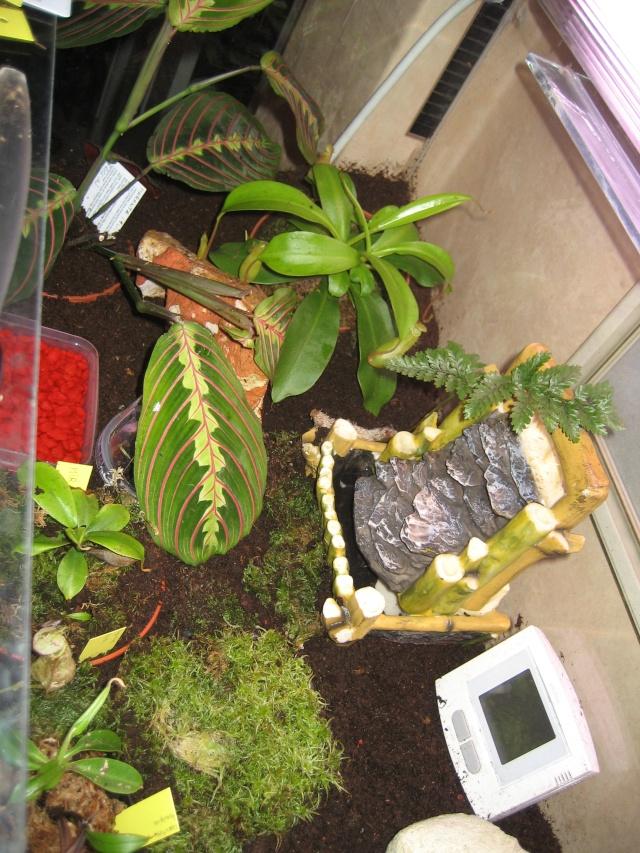 Comment relooker un terra à heterometrus spinifer Terrar15