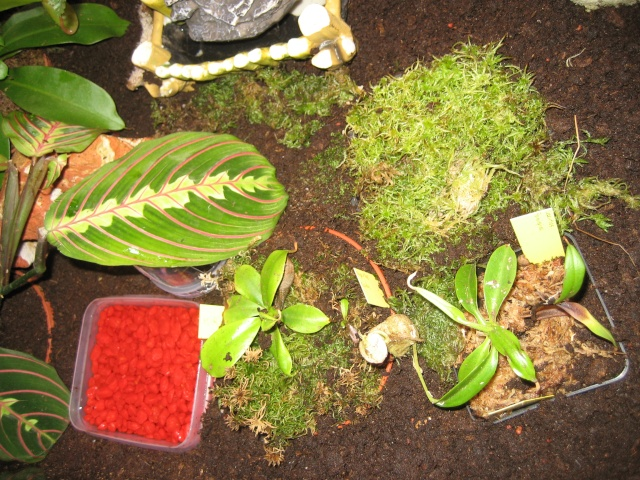 Comment relooker un terra à heterometrus spinifer Terrar16