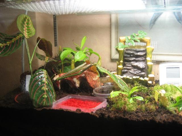 Comment relooker un terra à heterometrus spinifer Terrar21